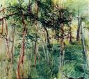 120el-bosque-boldinib.jpg